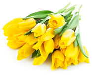 Bouquet of yellow tulip flowers Royalty Free Stock Photo