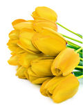 Bouquet of a yellow tulips. On a white background Stock Image