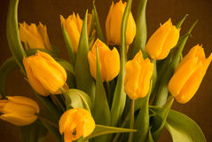 Bouquet of  yellow tulips Royalty Free Stock Photo
