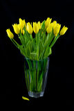 Bouquet of yellow tulips Stock Photography