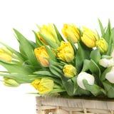Bouquet of yellow tulips Stock Image