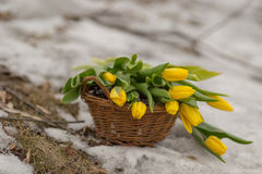 Bouquet of yellow tulips in a brown basket on a light blurred background Stock Photo