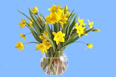 Bouquet of yellow tulips in a glass vase Royalty Free Stock Photography