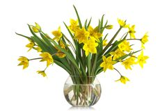 Bouquet of yellow tulips in a glass vase Royalty Free Stock Photos