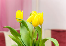 Bouquet of yellow tulips. In indoors Stock Images