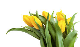 Bouquet of yellow tulips isolated on white background. Royalty Free Stock Photos