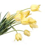 Bouquet of yellow tulips isolated on white Stock Photography