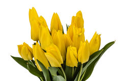 Bouquet from yellow tulips, isolated on white background Royalty Free Stock Photography