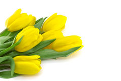 Bouquet of yellow tulips isolated on white background with clipp Royalty Free Stock Images