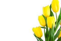 Bouquet of yellow tulips isolated on white background Stock Images