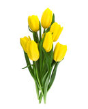 Bouquet of yellow tulips isolated on white background Stock Image