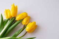 A bouquet of yellow tulips lies in the upper left corner on a white background