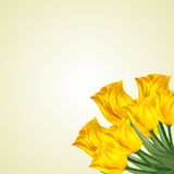 Bouquet of yellow tulips on a light background. Royalty Free Stock Images