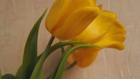 A bouquet of yellow tulips. On the marble kitchen table there are yellow tulips in a glass vase stock footage