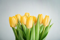 Bouquet of yellow tulips Royalty Free Stock Image