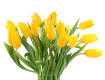 Bouquet of yellow tulips in a vase Stock Image