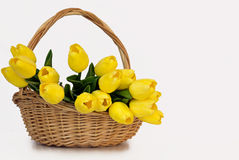 Bouquet of Yellow Tulips in a Wicker Basket on a White Background Stock Image