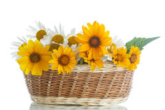 Bouquet of yellow and white daisies Royalty Free Stock Image