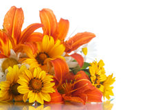 Bouquet of yellow and white daisies Stock Images