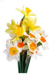 Bouquet of yellow and white narcissus Stock Photography