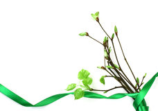 Bouquet of young spring branches, green ribbon Royalty Free Stock Photos