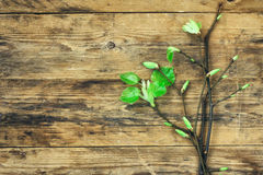Bouquet of young spring branches with leaves Royalty Free Stock Image