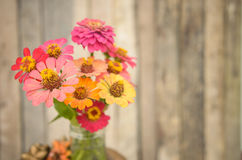 Bouquet of zinnia flowers Stock Image