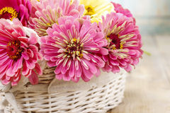 Bouquet of zinnia flowers in wicker basket. Royalty Free Stock Image