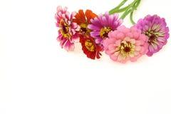 Bouquet of zinnia Royalty Free Stock Photos