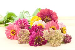 Bouquet of zinnias. Fresh flowers from the cutting garden, zinnias and yarrow, ready to made into an arrangement Royalty Free Stock Image