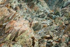 Bouquetin alpin, bouquetin de Capra, avec l'arbre de mélèze orange d'automne à l'arrière-plan de colline, mamie Paradiso, Italie  photographie stock