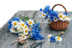 Bouquets of beautiful wild flowers of daisies and cornflowers on a wooden old background. Isolated Stock Photo