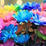 Bouquets of blossom rainbow Chrysanthemum flowers Royalty Free Stock Photo