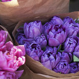 Bouquets of blue tulips  in craft paper Stock Images