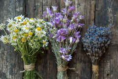 Bouquets of camomile, lavender and chicory Royalty Free Stock Photo