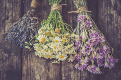 Bouquets of camomile, lavender and chicory Royalty Free Stock Photography
