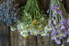 Bouquets of camomile, lavender and chicory Stock Photos