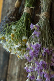 Bouquets of camomile, lavender and chicory Royalty Free Stock Image