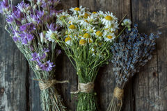 Bouquets of camomile, lavender and chicory Stock Image