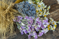 Bouquets of camomile, lavender, wheat and chicory. Stock Images