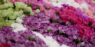 Bouquets of carnations. Dense bouquets of colorful and variegated carnations stock photo