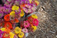 Bouquets de Zinnia d'arc-en-ciel \ de 's à vendre photos stock