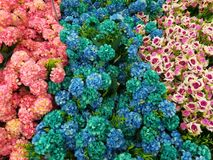 Decorative flowers - blue and pink Stock Images