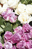 Bouquets des roses blanches et roses Images stock