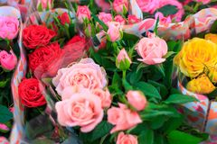 Bouquets des roses de différentes couleurs Photographie stock libre de droits