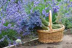 Bouquets of lavender in wicker basket Royalty Free Stock Image