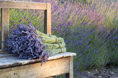 Bouquets on lavenders on a wooden old bench. Pile of lavender flower bouquets on a wooden old bench in a summer garden Royalty Free Stock Photography