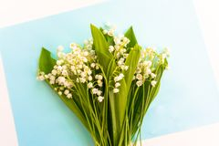 Bouquets of lily of the valley on a blue background. stock photo