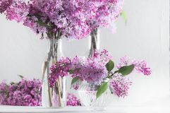 Bouquets of lush fresh purple lilac in glass vases. royalty free stock photos
