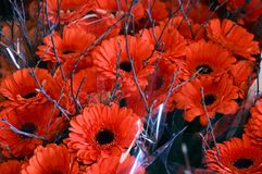 Bouquets of orange flowers with twigs Royalty Free Stock Photo
